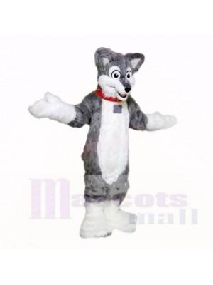 Gris Poids léger Rauque Chien Costumes De Mascotte École