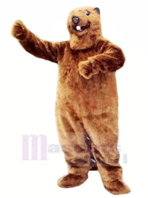 Meilleur Qualité Castor Mascotte Les costumes Animal