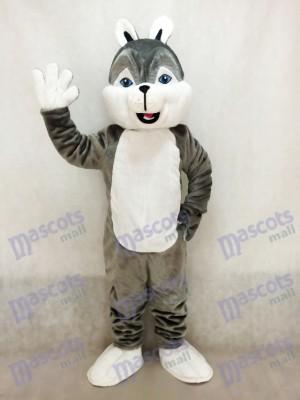 Costume de mascotte de chien husky gris mignon