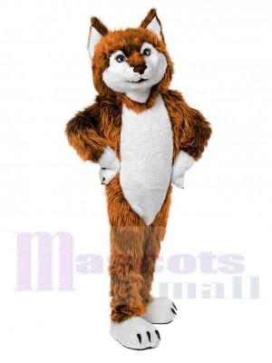 Loup costume de mascotte